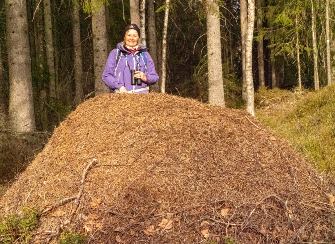 A huge anthill by the hiking trail